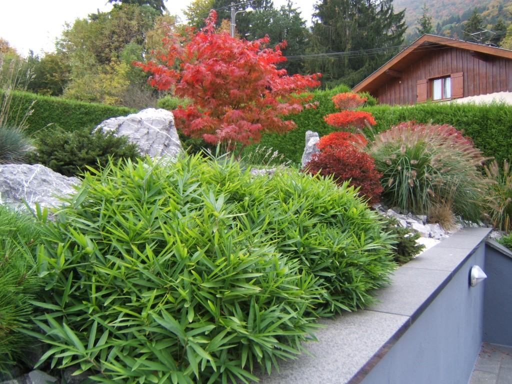 couleur d'automne Acer palmatum 'Osakasuki'