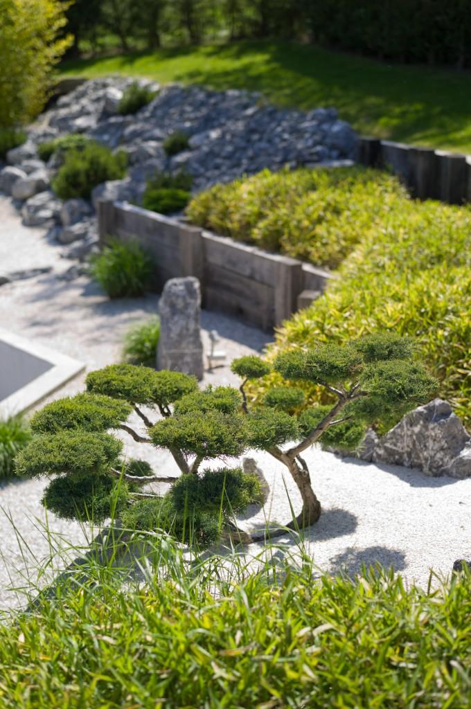 Juniperus chinensis pfitzeriana 'Glauca'