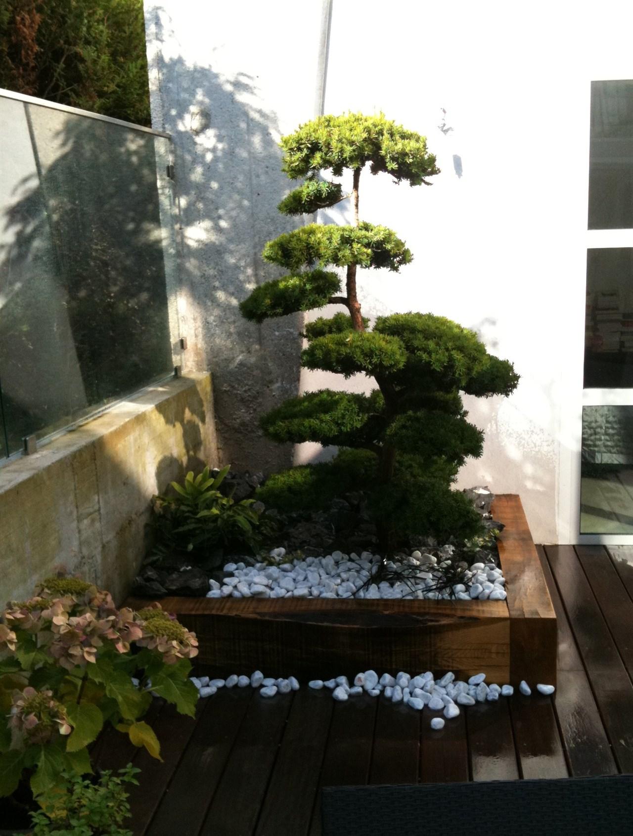 Planté dans un petit jardin terrasse privé à Annecy. La jardinière est incrustée dans la terrasse en ipé.